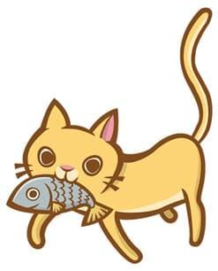 猫とさかな-min