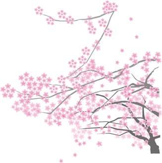 sakura-min