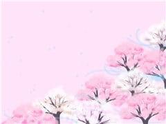 山桜-min