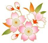 桜3-min