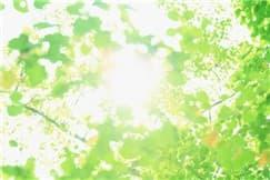 木漏れ日-min
