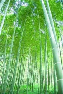 竹林-min