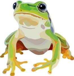 蛙-min