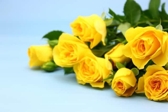 黄色いバラ-min