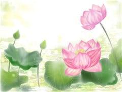 蓮の花②-min
