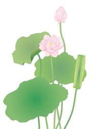 蓮の花③-min