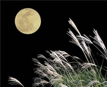 お月見-min