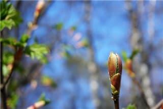 春の兆し-min
