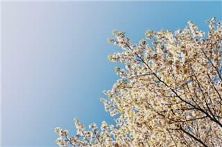 春分-min