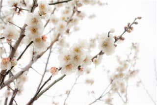 立春②-min