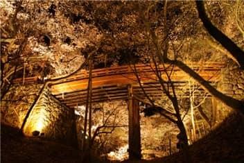 高遠城址公園(夜桜)-min