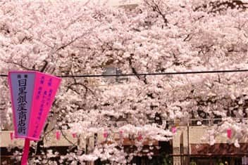 目黒川桜-min