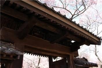 高遠城址公園桜②-min