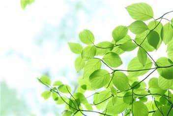 新緑➁-min