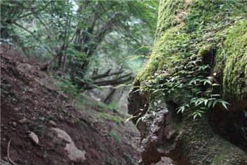 森林-min