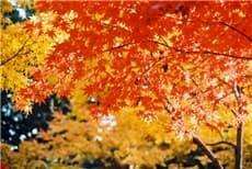 紅葉-min
