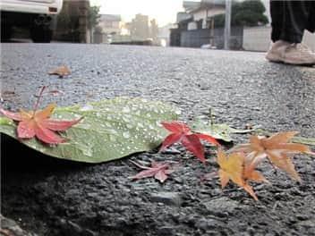 秋雨-min