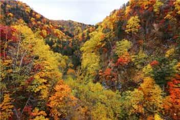 秋の山-min