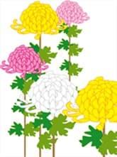 菊の花-min