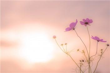 秋の日差し-min
