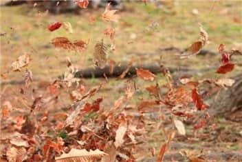 舞う木の葉-min