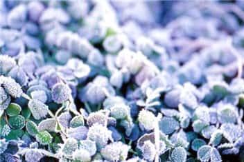 霜②-min