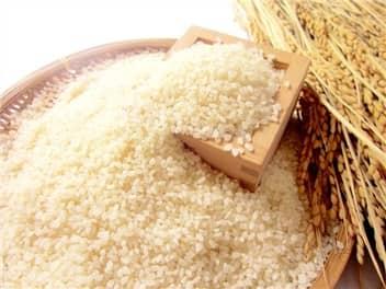 米と稲穂-min