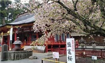 塩釜神社(桜)-min